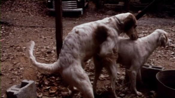 The beloved dog copulation scene from Poor Pretty Eddie