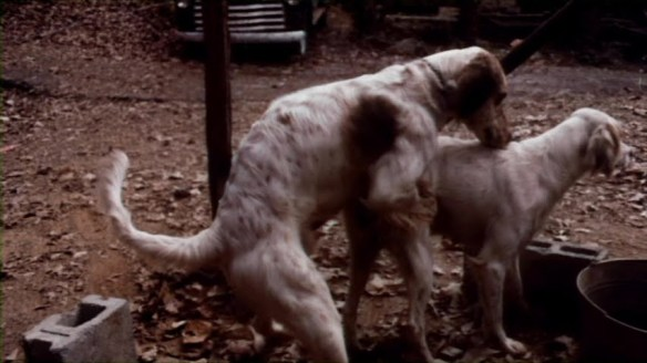 The beloved dog copulation scene from Poor Pretty Eddie