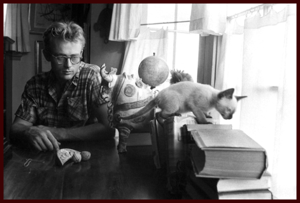 James Dean and cat